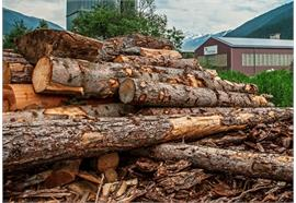 Brennholz lang ab Lagerplatz